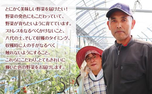 八代市産 宮島農園 トマト 4種 セット 計3kg とまと