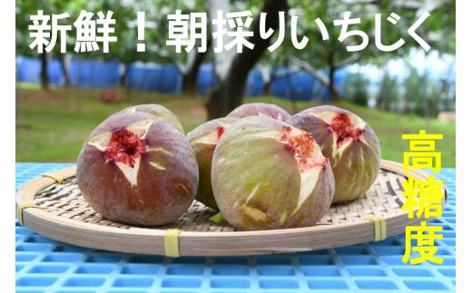 CP-004 新鮮朝採りいちじく1.5kg【高糖度・ハウス栽培】
