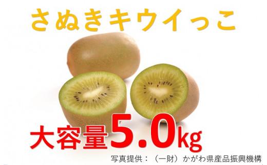 1030 【大容量】さぬきキウイっこ5.0kg
