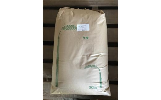 C-123 山口市産「恋の予感」玄米30kg