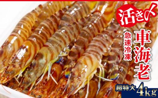 【2020年1月~発送】活き〆急速冷凍車海老:超特大4kg
