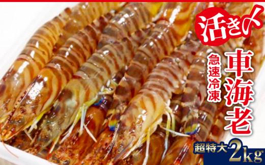 【2020年1月~発送】活き〆急速冷凍車海老:超特大2kg