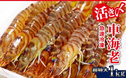 【2020年1月~発送】活き〆急速冷凍車海老:超特大1kg