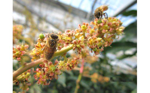 ミツバチが受粉してくれます。