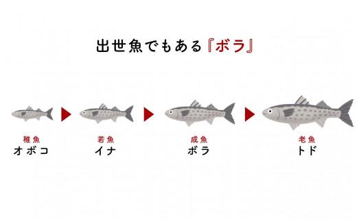 縁起が良い魚の集まりでもある「出世魚」