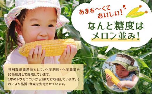 熊本県産 スイートコーン 4kg 高糖度 朝採り 新鮮 とうもろこし