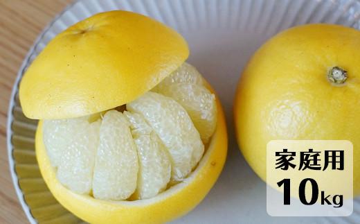 高知県産 土佐文旦 家庭用 10kg 【1070536】