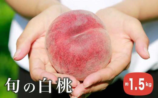 H-76 旬の白桃 約1.5㎏(品種の指定は出来ません。)
