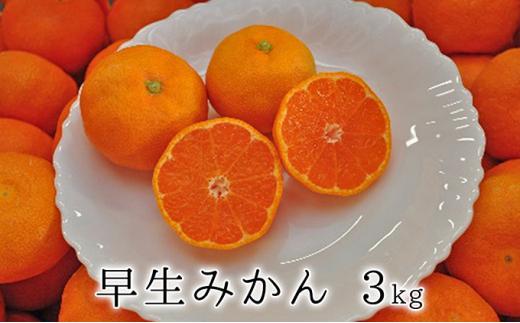 [№5550-0588]秋の味覚 果汁たっぷり 早生みかん3kg【2020年11月上旬以降お届け】