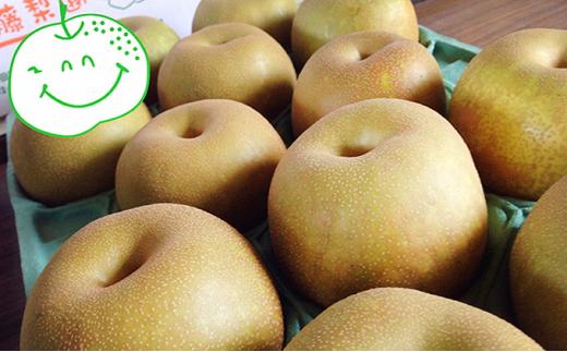 [№5672-0412]白岡・下野田 斉藤さんちの美味しい梨 2.5kg