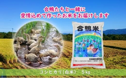 [№5836-0378]熊本県産「合鴨米」コシヒカリ5kg