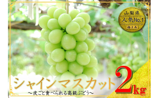 【高級】山梨県産 シャインマスカット3~4房 (約2kg)