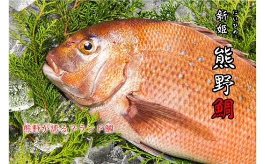 水谷水産 【新姫 熊野鯛】 下処理済み