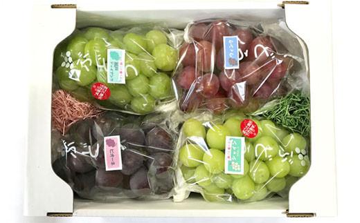 ぶどう詰め合わせセット②<約2.1kg~約2.5kg:前田果樹園>  SMK04