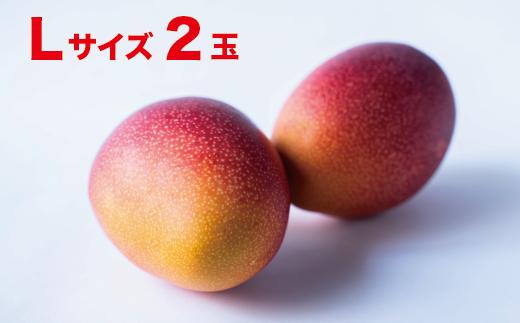宮崎県産完熟マンゴー(300g×2玉)Lサイズ【A194】