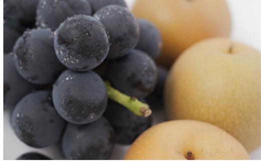 ぶどう・梨詰め合わせ<合計約3.7kg:種子田ぶどう園>  STB02