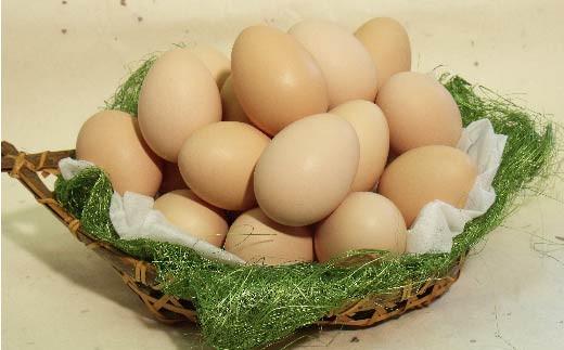 きれいな湧水を飲み、のびのびと育ったジローが産む卵は自然の恵みが凝縮された味わいで卵黄独特の臭みが無く、甘味があるのが特徴です。