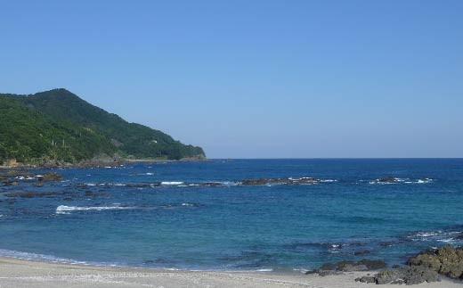 綺麗な黒潮海流が流れ込む雄大な太平洋を前に「海は地球のスープです。」と吉田さんは熱く語ります。