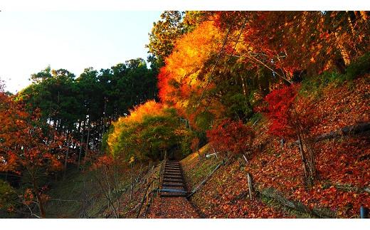 秋には紅葉も楽しめます。