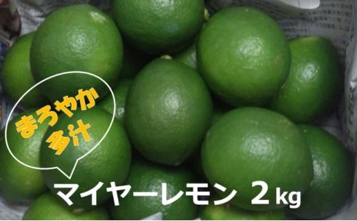 [№5747-0593]マイヤーレモン(島レモン)