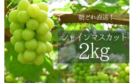 【2020年発送分先行予約】シャインマスカット 2.0kg相当