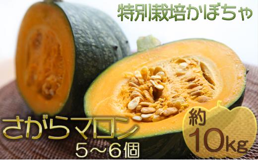 [№5539-0336]北海道厚沢部産 特別栽培かぼちゃ さがらマロン 5~6個 約10kg