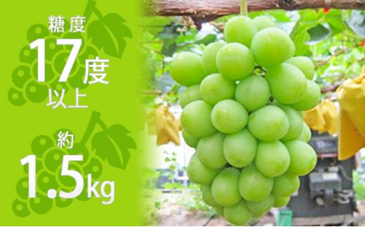 [№4631-1975]  約1.5kg シャインマスカット 讃岐育ちのフルーツ ・ぶどう 旬  高級 ブドウ 人気 果物 夏