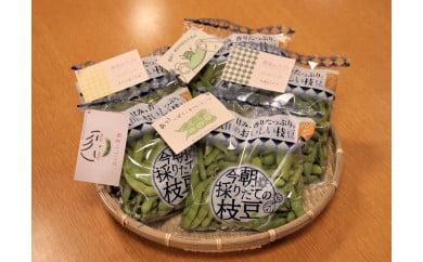 今朝採れたて枝豆【8月上旬頃~発送予定】