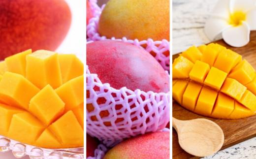 【7月27日まで】贅沢マンゴー食べ比べ特別便 計4キロ