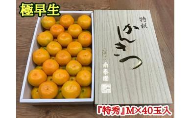 ■【極早生・有田みかん】化粧箱『特秀』Mサイズ40玉入