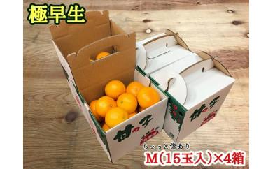 ■ちょっと傷【極早生・有田みかん】Mサイズ15個入×4箱《手さげ箱》