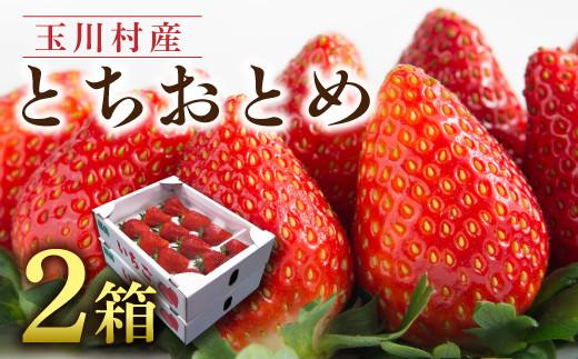 FT18-104《先行予約》【数量限定】玉川村産とちおとめ(約1~1.2㎏)