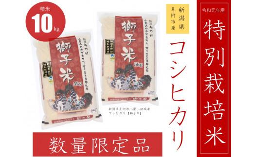 【数量限定】 新潟県産 コシヒカリ 県認証 特別栽培米 「獅子米」精米 10㎏