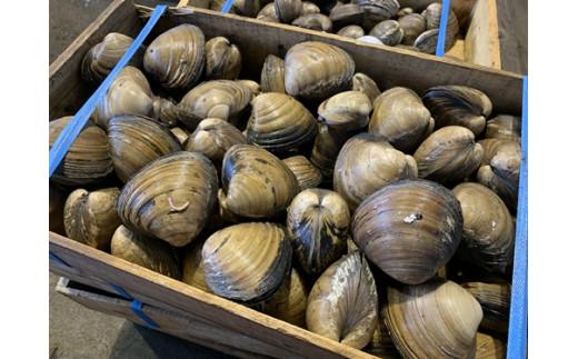 【お刺身や炊き込みご飯によし!】ホッキ貝(約5kg)