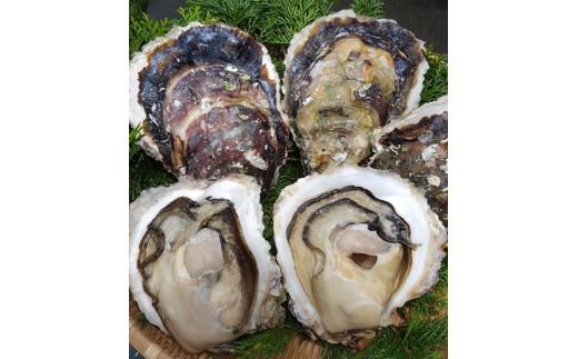 【M16】岩牡蠣(特大サイズ)