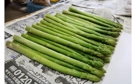 北海道乙部町 鈴木農園の夏採りグリーンアスパラ1kg