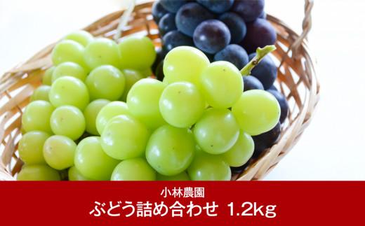 【011P006】[小林農園] 新潟フルーツ 新潟県産 旬のぶどう詰合せ 1.2kg ※クレジット限定