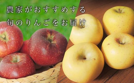 10〜11月にかけて収穫される「秋映」,「シナノスイート」,「シナノゴールド」などのりんごの中から旬のりんご一種をお届けします。