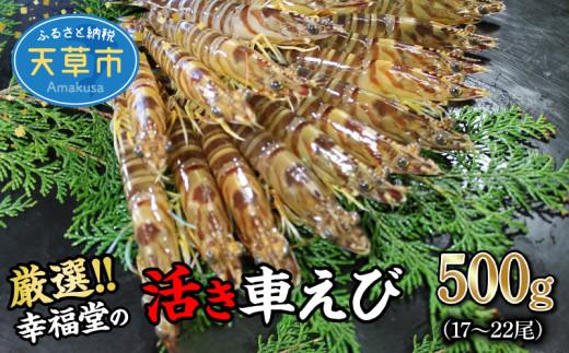 S005-001_【鮮度抜群】厳選・幸福堂の活き車えび(500g)17~22尾