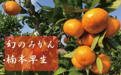 【先行予約10kg入り】レア品種 楠本早生 有田みかん【11月中頃到着】