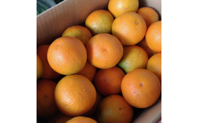 ■頑固果物屋の完熟無袋バレンシヤオレンジ特撰L~2L(約5kg)