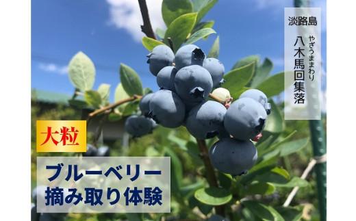 【夏休み限定】淡路島で大粒ブルーベリー摘み取り体験@八木馬回