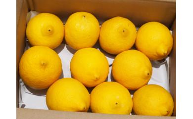 ★2020年10月発送開始★【月間20箱限定】皮まで美味しい無農薬グリーンレモン1.2㎏