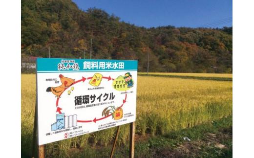 飼料米循環サイクル