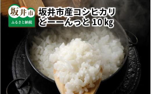 [A-1011] 令和元年産米 坂井市産コシヒカリどーーんっと10kg