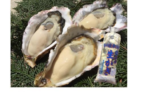 H-12 室津産殻付き牡蠣&むき身 ※殻付き2キロ、むき身500グラム×1