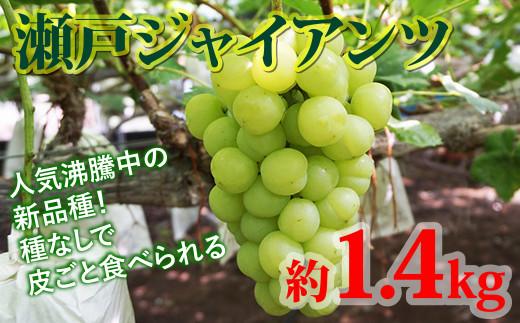瀬戸ジャイアンツ 1.4kg 西都市産完熟ぶどう【先行予約】<1-164>