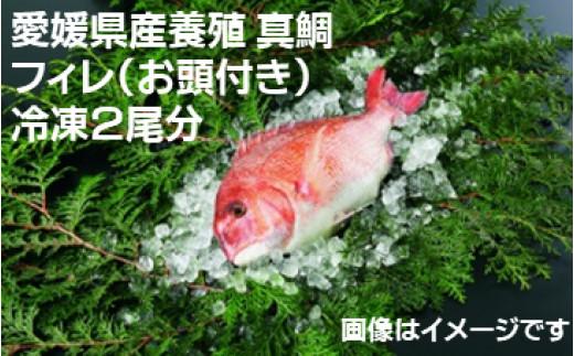 【愛媛県共通返礼品】愛媛県産養殖真鯛フィレ2枚(お頭付き冷凍)×2尾分