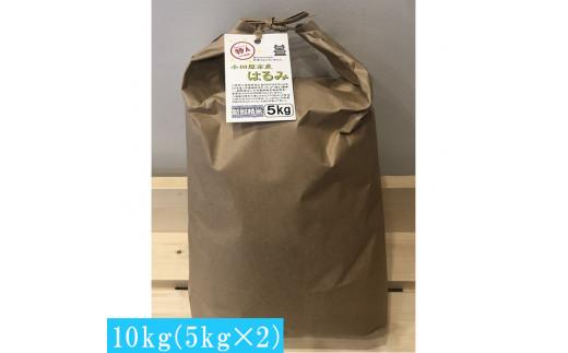 令和2年小田原市産 はるみ 新米 10kg(5kgx2)