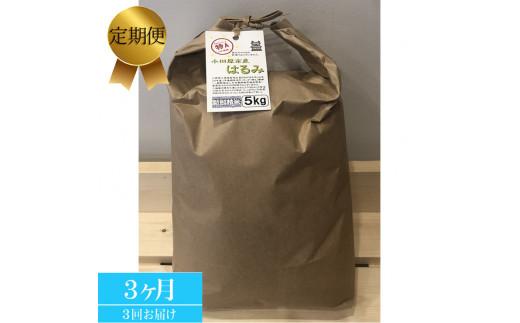 【定期便 3ヶ月】志村屋 令和2年小田原市産 はるみ 新米 5kg